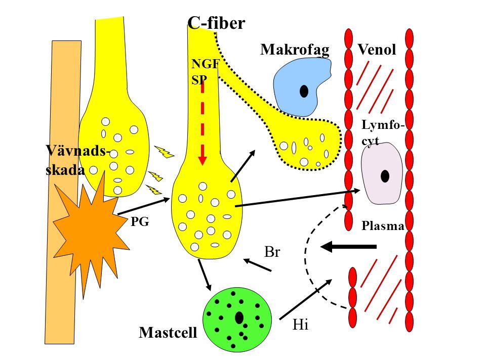 Mastcell Plasma Lymfo- cyt C-fiber Br Venol Hi Makrofag NGF SP Vävnads- skada PG