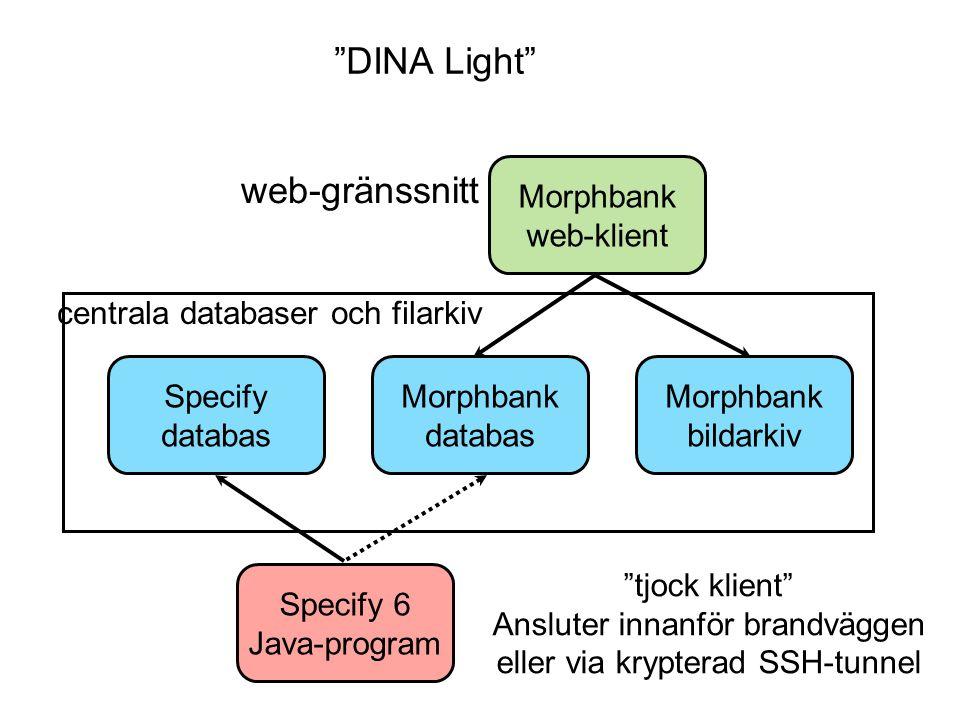 """web-gränssnitt """"tjock klient"""" Ansluter innanför brandväggen eller via krypterad SSH-tunnel Morphbank web-klient Morphbank databas Specify databas Spec"""