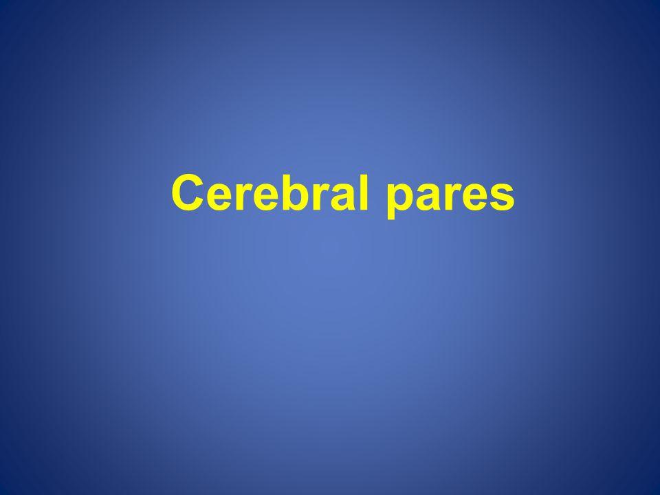 Cerebral pares