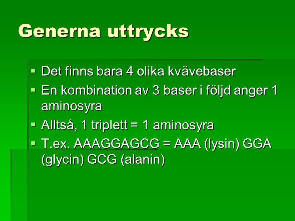 Generna uttrycks  Det finns bara 4 olika kvävebaser  En kombination av 3 baser i följd anger 1 aminosyra  Alltså, 1 triplett = 1 aminosyra  T.ex.
