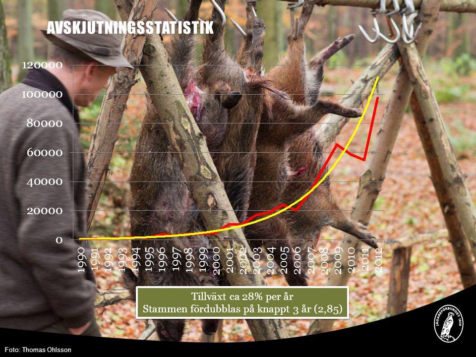 AVSKJUTNINGSSTATISTIK Tillväxt ca 28% per år Stammen fördubblas på knappt 3 år (2,85) Tillväxt ca 28% per år Stammen fördubblas på knappt 3 år (2,85) Foto: Thomas Ohlsson