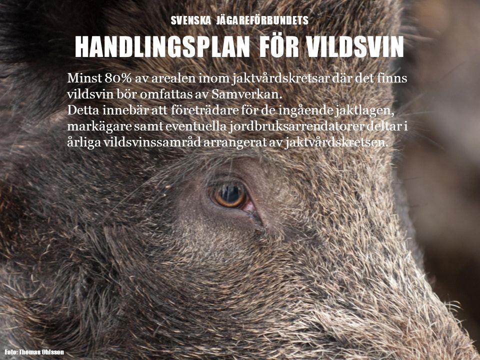 SVENSKA JÄGAREFÖRBUNDETS HANDLINGSPLAN FÖR VILDSVIN Foto: Thomas Ohlsson Minst 80% av arealen inom jaktvårdskretsar där det finns vildsvin bör omfattas av Samverkan.