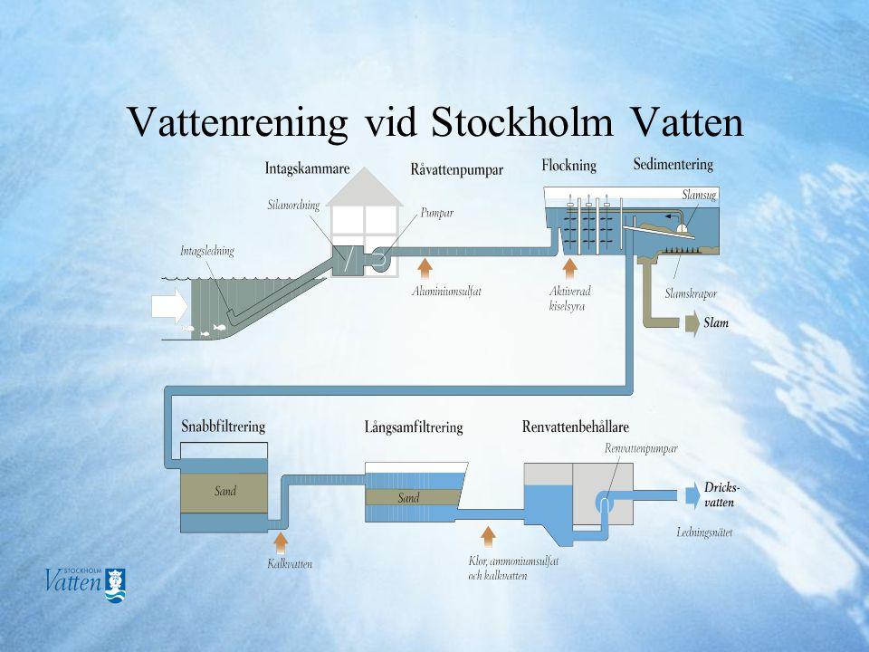 Vattenrening vid Stockholm Vatten