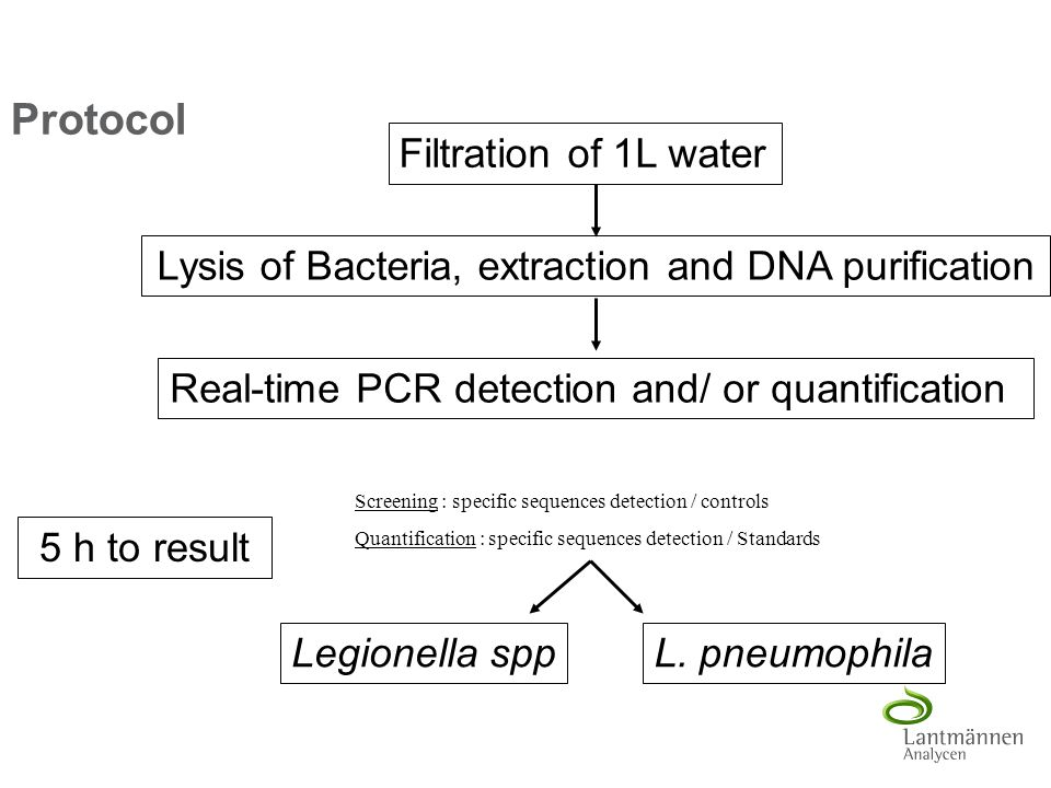 Protocol 5 h to result Filtration of 1L water Lysis of Bacteria, extraction and DNA purification Real-time PCR detection and/ or quantification Legion