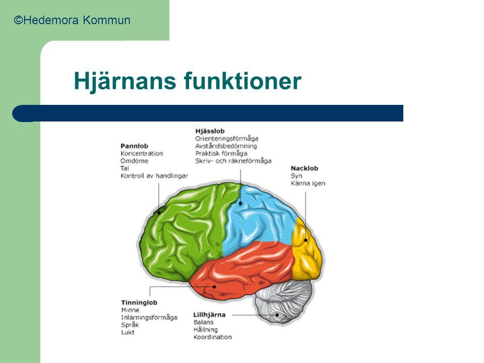 Bilder på hjärnan Hjärnan ovan ifrån Hjärnan från sidan Rött – många aktiva nervceller Gult – ganska många aktiva nervceller Grönt – få aktiva nervceller Blått – minst aktiva nervceller ©Hedemora Kommun
