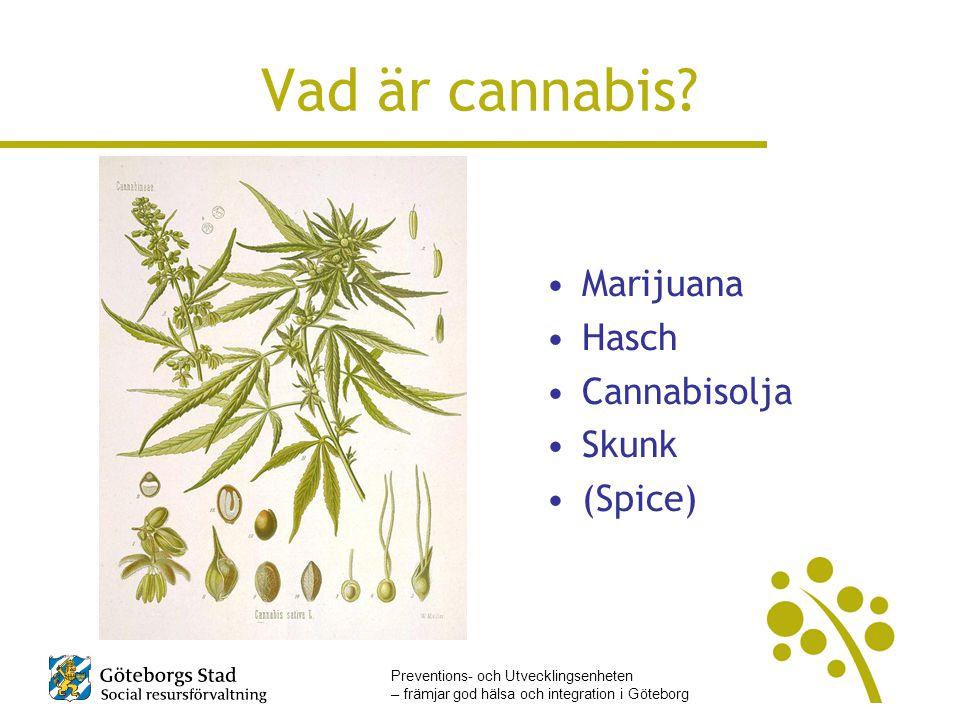Preventions- och Utvecklingsenheten – främjar god hälsa och integration i Göteborg Vad är cannabis? •Marijuana •Hasch •Cannabisolja •Skunk •(Spice)