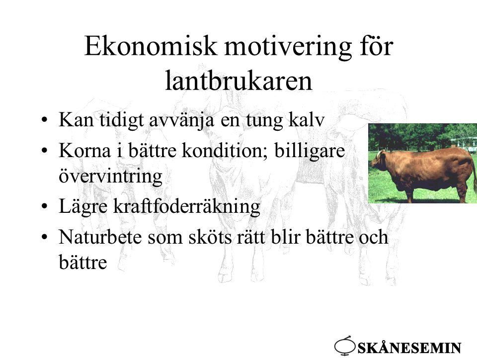 Ekonomisk motivering för lantbrukaren •Kan tidigt avvänja en tung kalv •Korna i bättre kondition; billigare övervintring •Lägre kraftfoderräkning •Naturbete som sköts rätt blir bättre och bättre