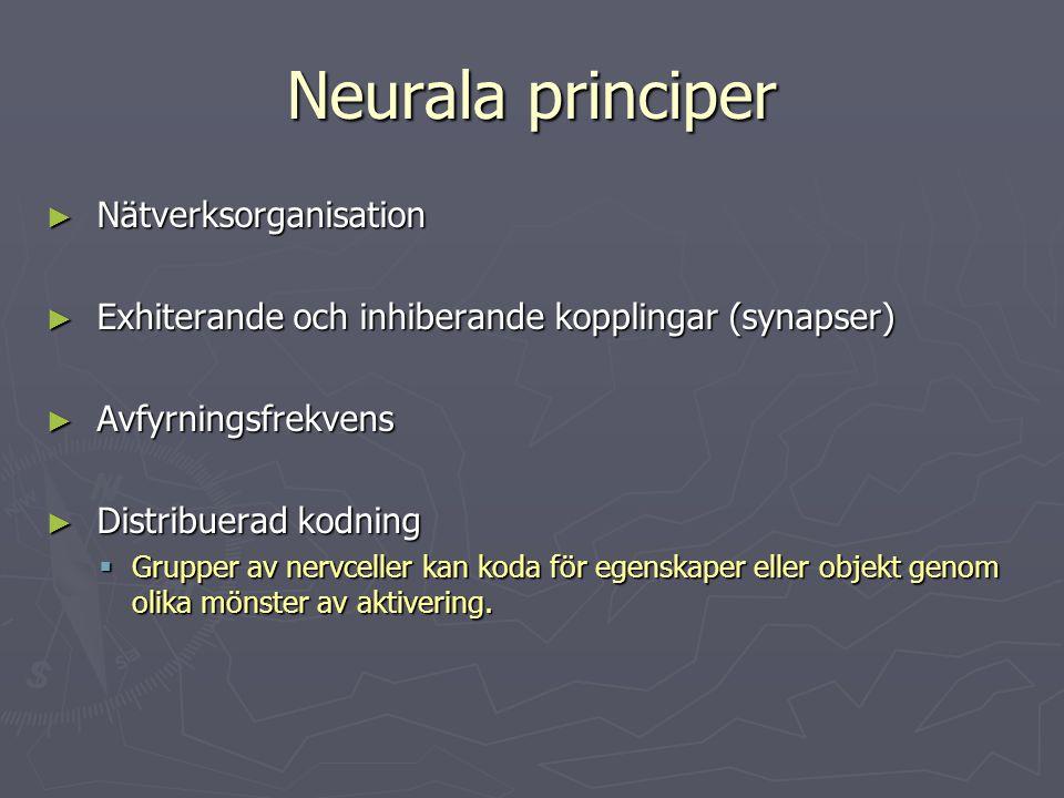 Neurala principer ► Nätverksorganisation ► Exhiterande och inhiberande kopplingar (synapser) ► Avfyrningsfrekvens ► Distribuerad kodning  Grupper av