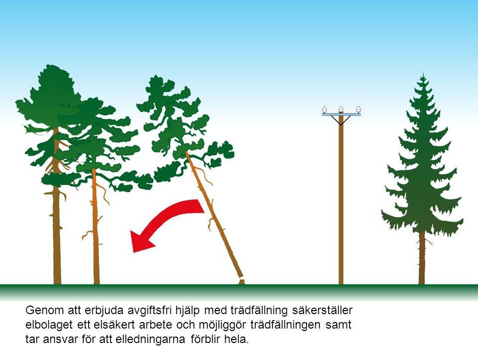 Genom att erbjuda avgiftsfri hjälp med trädfällning säkerställer elbolaget ett elsäkert arbete och möjliggör trädfällningen samt tar ansvar för att el