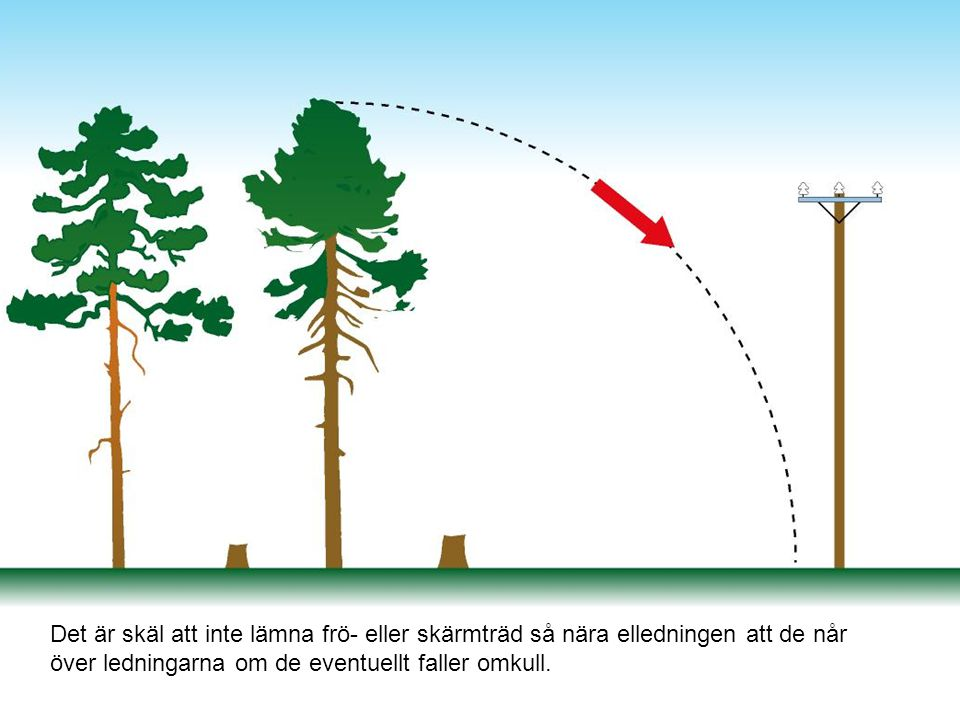Det är skäl att inte lämna frö- eller skärmträd så nära elledningen att de når över ledningarna om de eventuellt faller omkull.