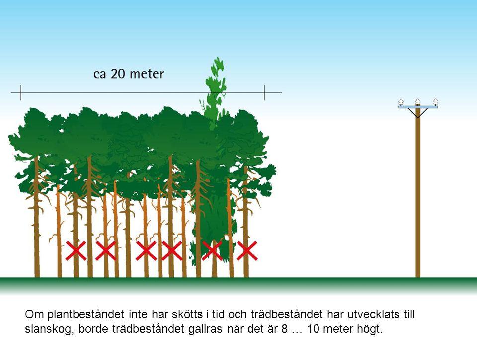 Vid den andra beståndsvårdande avverkningen i skog vid ledningsgator rekommenderas att man i första hand avlägsnar alla långa lövträd med smala toppar samt alla skadade och lutande träd.