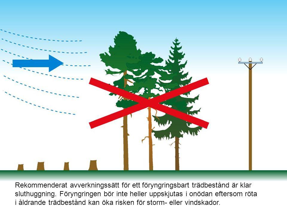 Rekommenderat avverkningssätt för ett föryngringsbart trädbestånd är klar sluthuggning. Föryngringen bör inte heller uppskjutas i onödan eftersom röta