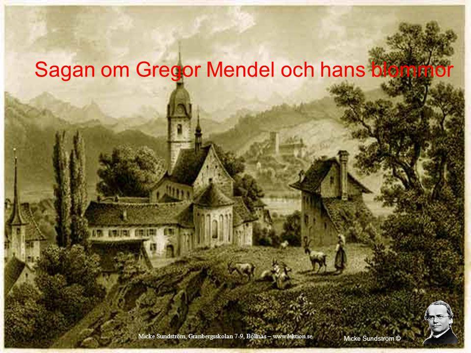 Sagan om Gregor Mendel och hans blommor Micke Sundström © Micke Sundström, Granbergsskolan 7-9, Bollnäs – www.lektion.se