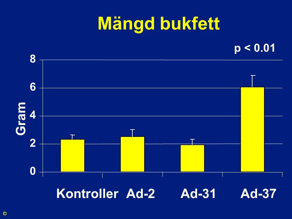 Mängd bukfett 0 2 4 6 8 Kontroller Ad-2Ad-31Ad-37 Gram p < 0.01 ©