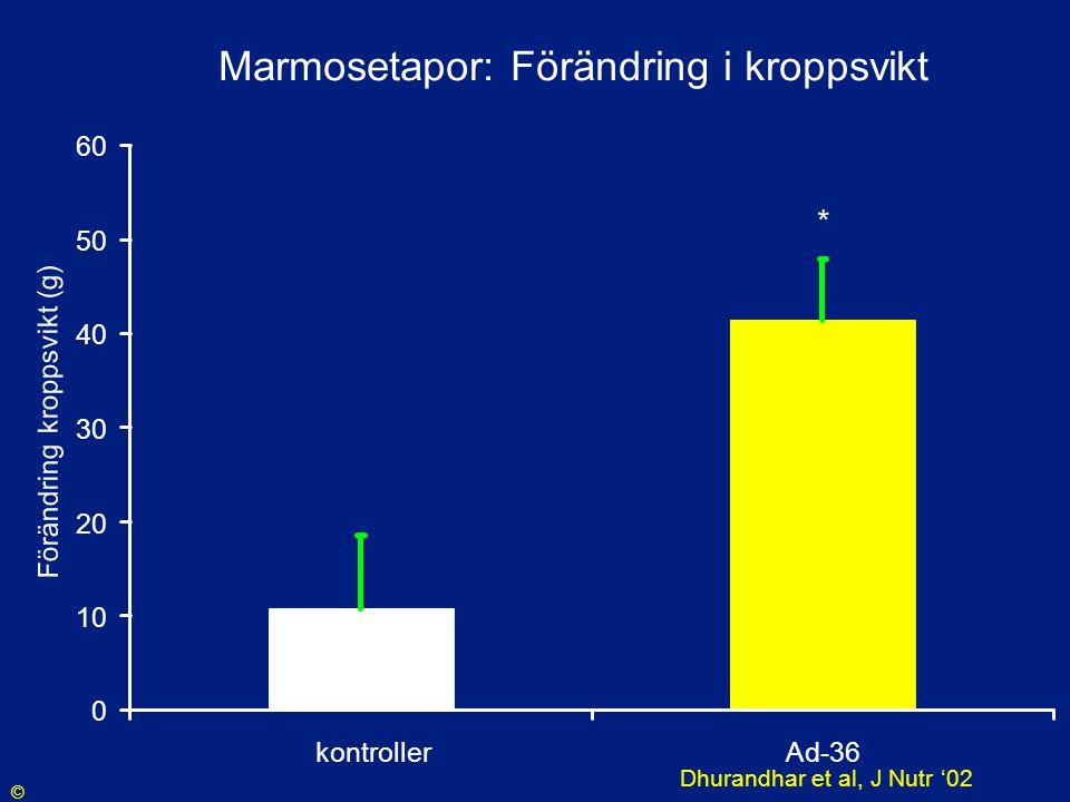 Marmosetapor: Förändring i kroppsvikt 0 10 20 30 40 50 60 kontrollerAd-36 Förändring kroppsvikt (g) * Dhurandhar et al, J Nutr '02 ©