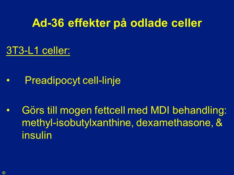Ad-36 effekter på odlade celler 3T3-L1 celler: • Preadipocyt cell-linje •Görs till mogen fettcell med MDI behandling: methyl-isobutylxanthine, dexamet