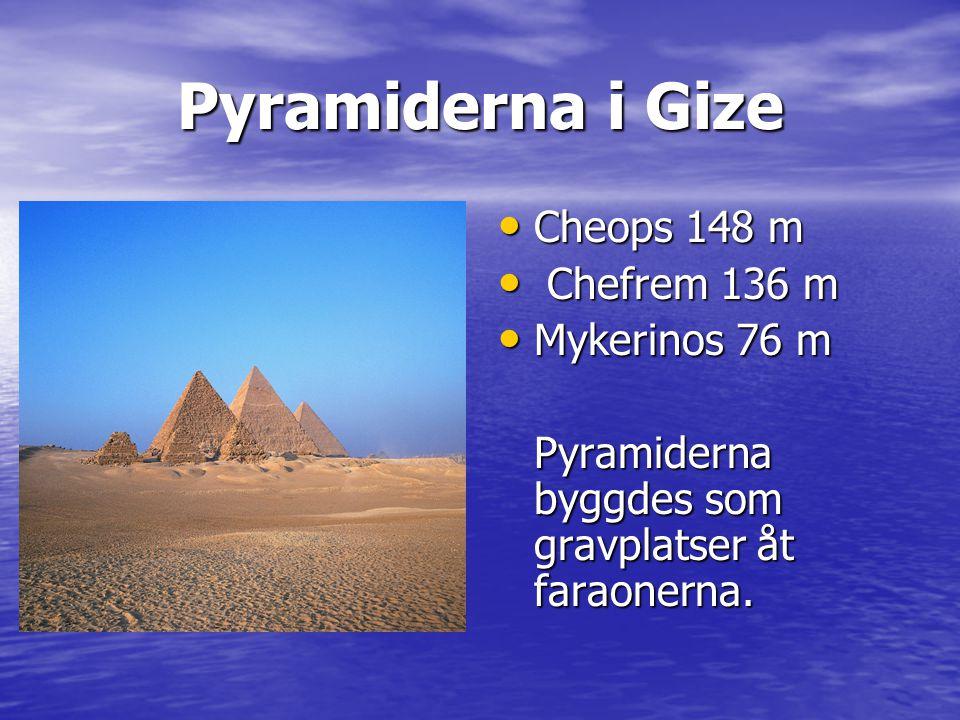 Papyrus med hieroglyfer • Papyrusväxten användes till att skapa det första pappret i historien.