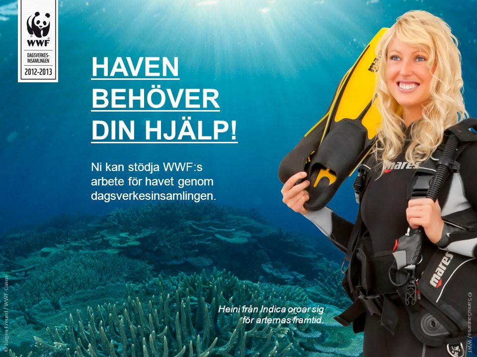 HAVEN BEHÖVER DIN HJÄLP! Ni kan stödja WWF:s arbete för havet genom dagsverkesinsamlingen. Heini från Indica oroar sig för arternas framtid. © Jürgen