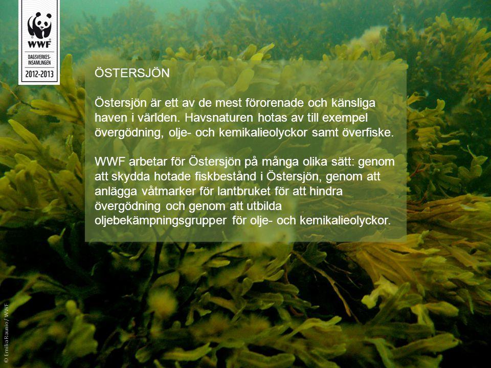 ÖSTERSJÖN Östersjön är ett av de mest förorenade och känsliga haven i världen. Havsnaturen hotas av till exempel övergödning, olje- och kemikalieolyck