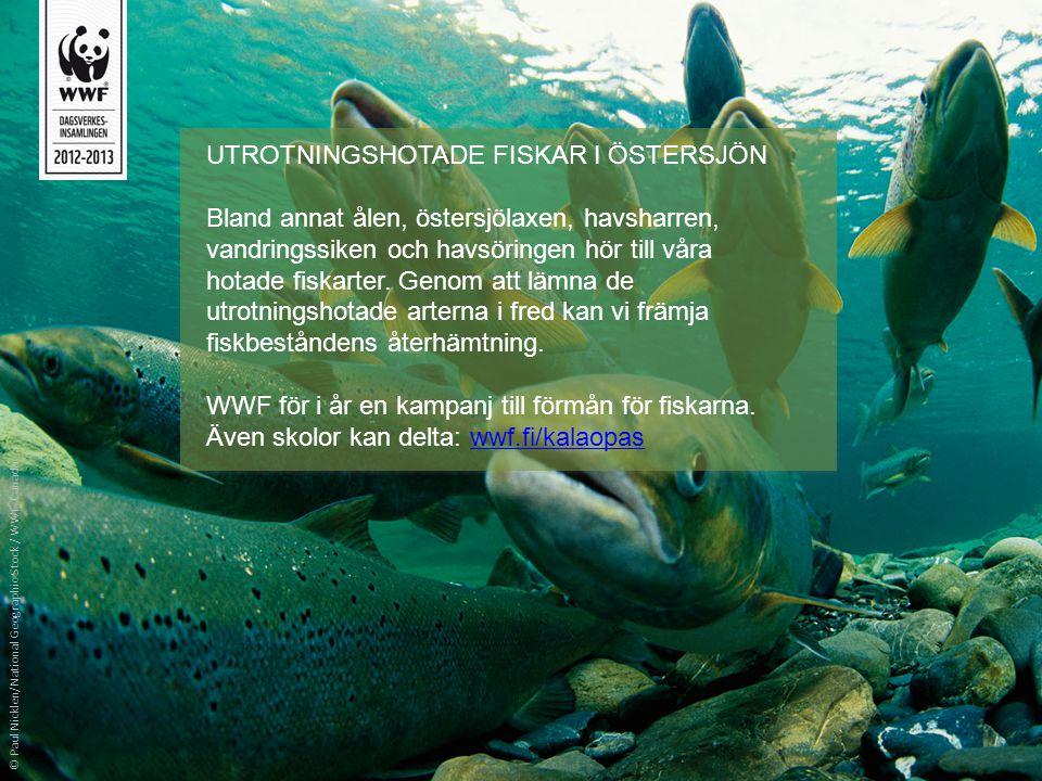 UTROTNINGSHOTADE FISKAR I ÖSTERSJÖN Bland annat ålen, östersjölaxen, havsharren, vandringssiken och havsöringen hör till våra hotade fiskarter. Genom