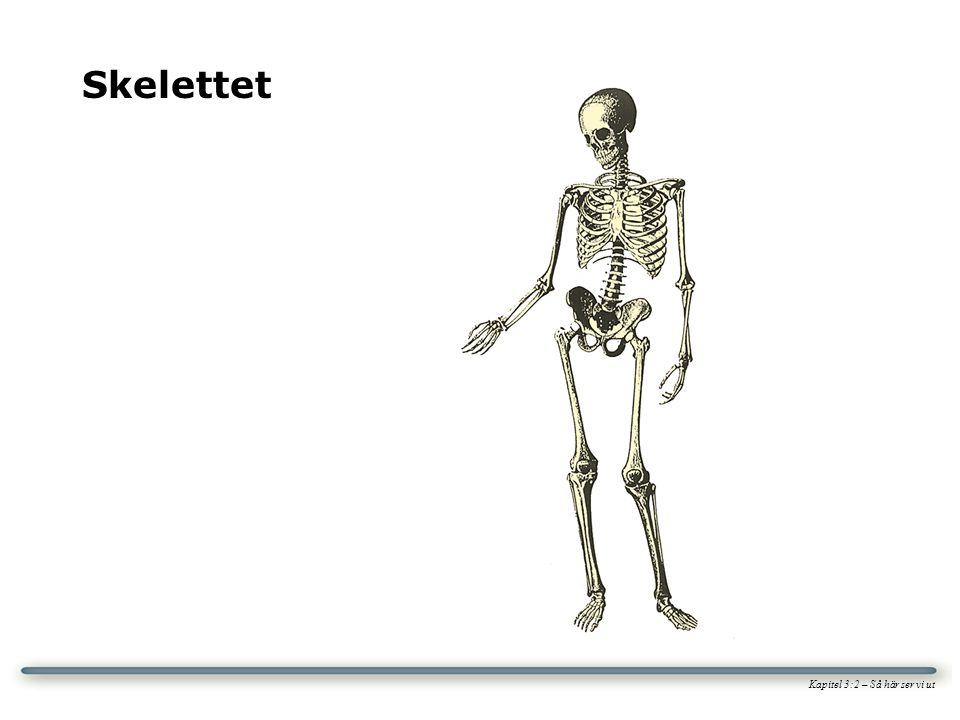 Kapitel 3:2 – Så här ser vi ut Skelettet