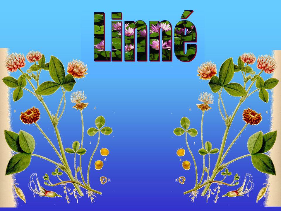 Linnes arbete •Linne jobbade med mediciner.