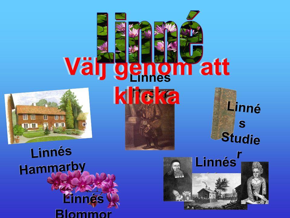 Linnés Hammarby Linnés Hammarby Linnés Resor Linnés Resor Linné s Studie r Linné s Studie r Välj genom att klicka Linnés Blommor Linnés Blommor Linnés Liv Linnés Liv