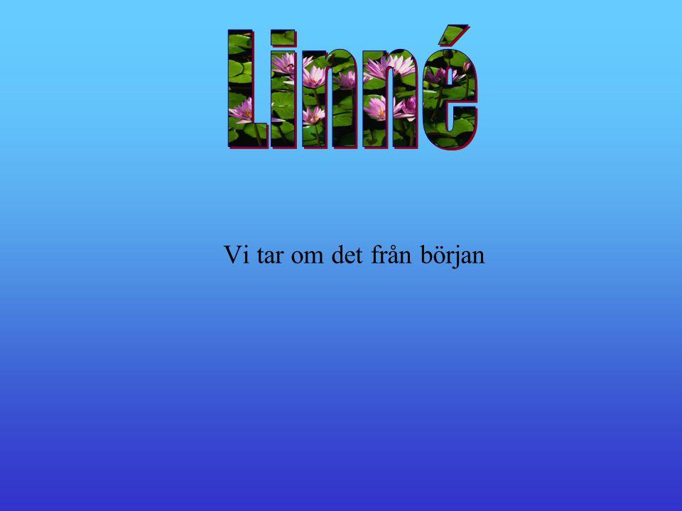 Linnés Hammarby Linnés Hammarby Linnés Resor Linnés Resor Linné s Studie r Linné s Studie r Välj genom att klicka Linnés Blommor Linnés Blommor Linnés