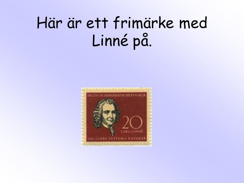 Här är Sara Stina. Det är Linnés näst-yngsta barn.