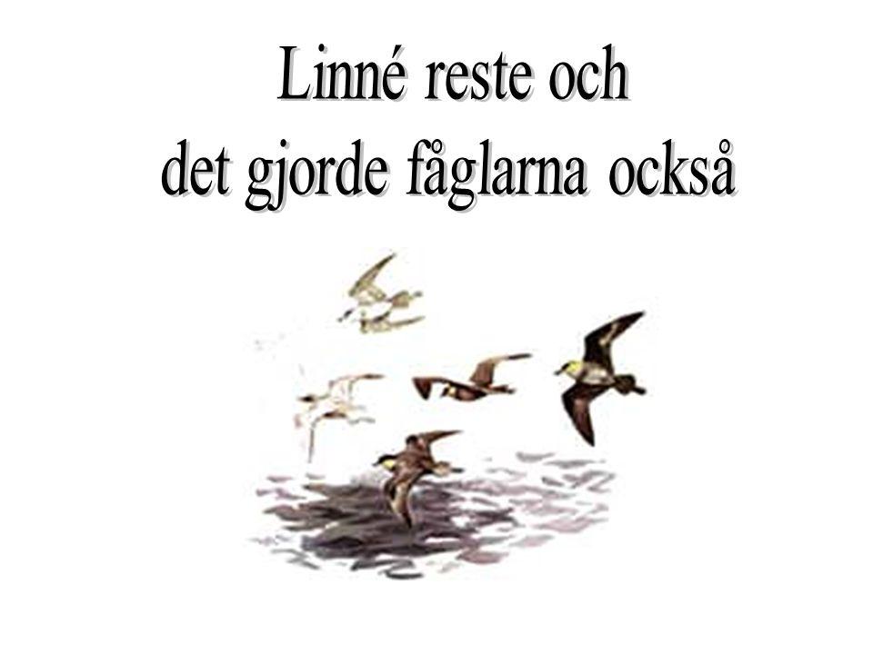 Linnes fritid var blommor och djur.Han jobbade mycket med mediciner.