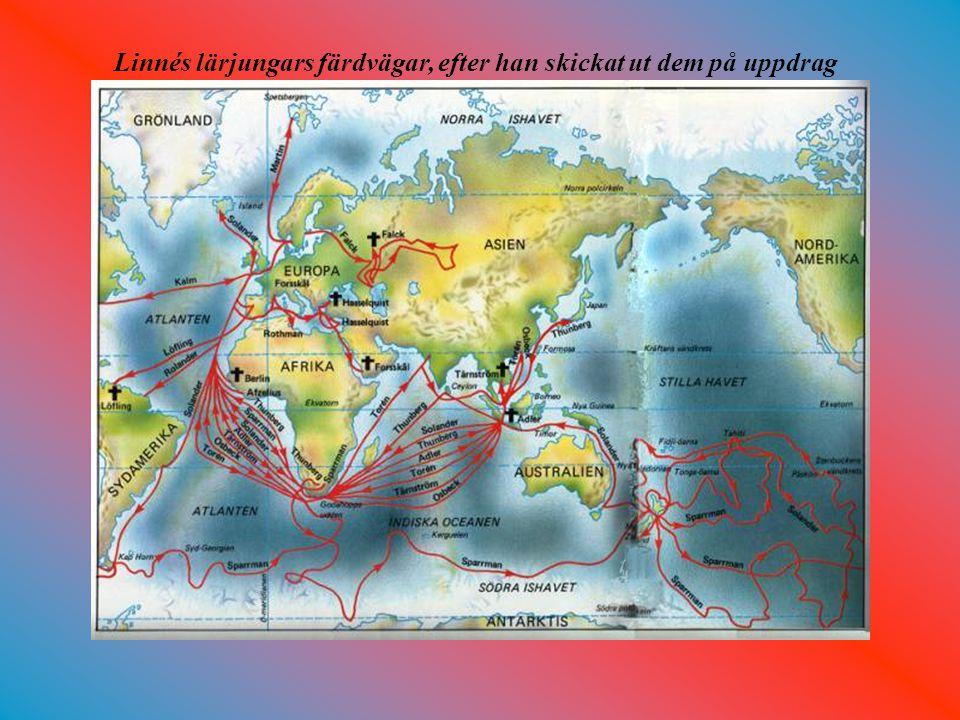 Linnés lärjungars färdvägar, efter han skickat ut dem på uppdrag