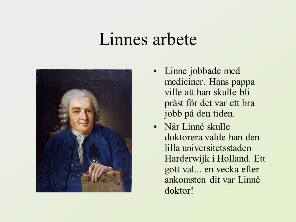 Fakta om Linné om hans jobb! ☼☼☼☼☼☼☼☼☼☼☼☼☼☼☼☼☼