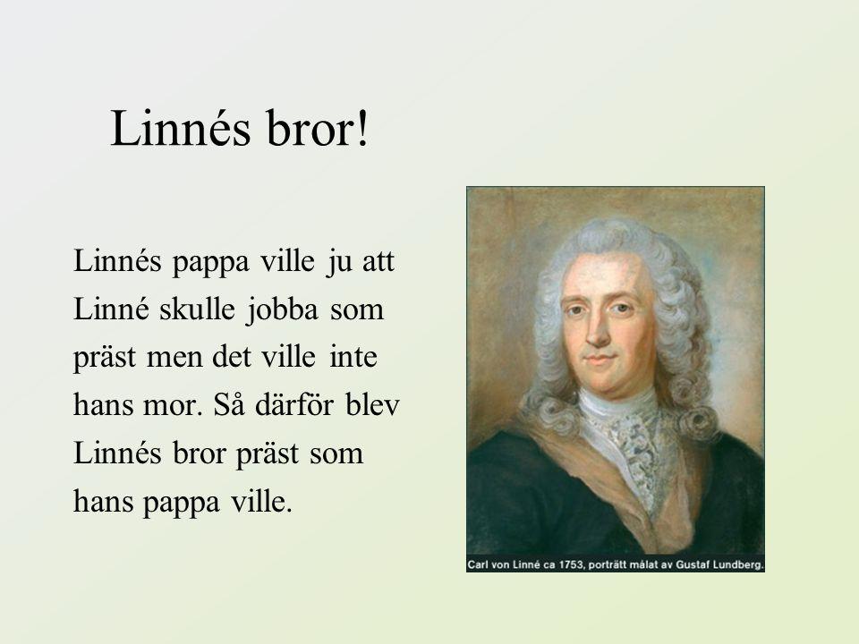Linnes arbete •Linne jobbade med mediciner. Hans pappa ville att han skulle bli präst för det var ett bra jobb på den tiden. •När Linné skulle doktore
