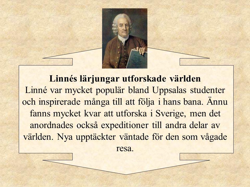 """Linnés två kortare resor till England och Frankrike Till England kom han """"år 1736 mitt i sommaren"""". Han fick """"besöka Chelse trädgårdar och senare """"Slo"""