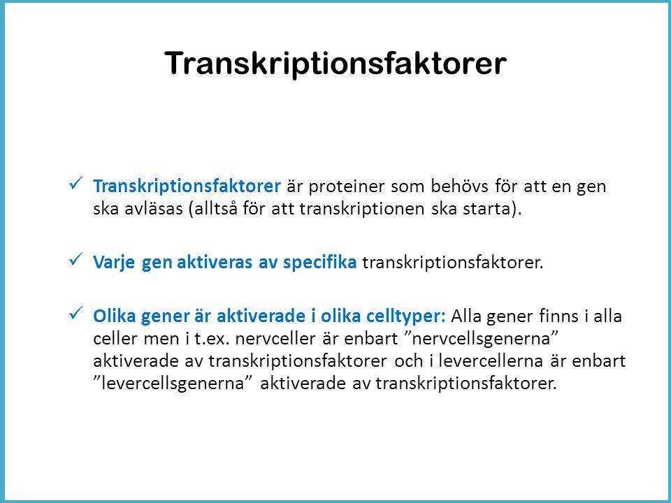 Transkriptionsfaktorer  Transkriptionsfaktorer är proteiner som behövs för att en gen ska avläsas (alltså för att transkriptionen ska starta).  Varj