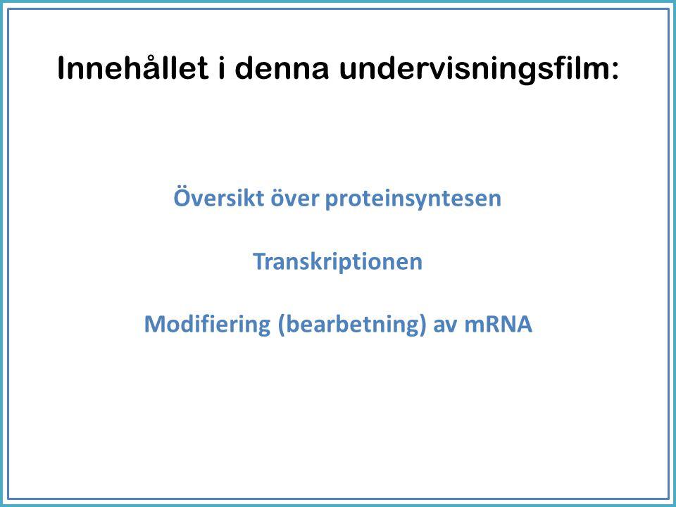 Översikt över proteinsyntesen Transkriptionen Modifiering (bearbetning) av mRNA Innehållet i denna undervisningsfilm: