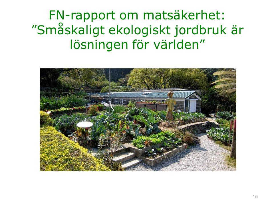 """FN-rapport om matsäkerhet: """"Småskaligt ekologiskt jordbruk är lösningen för världen"""" 15"""