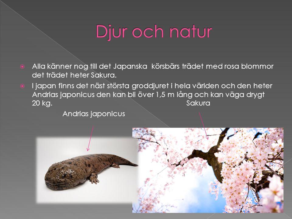  Alla känner nog till det Japanska körsbärs trädet med rosa blommor det trädet heter Sakura.  I japan finns det näst största groddjuret i hela värld