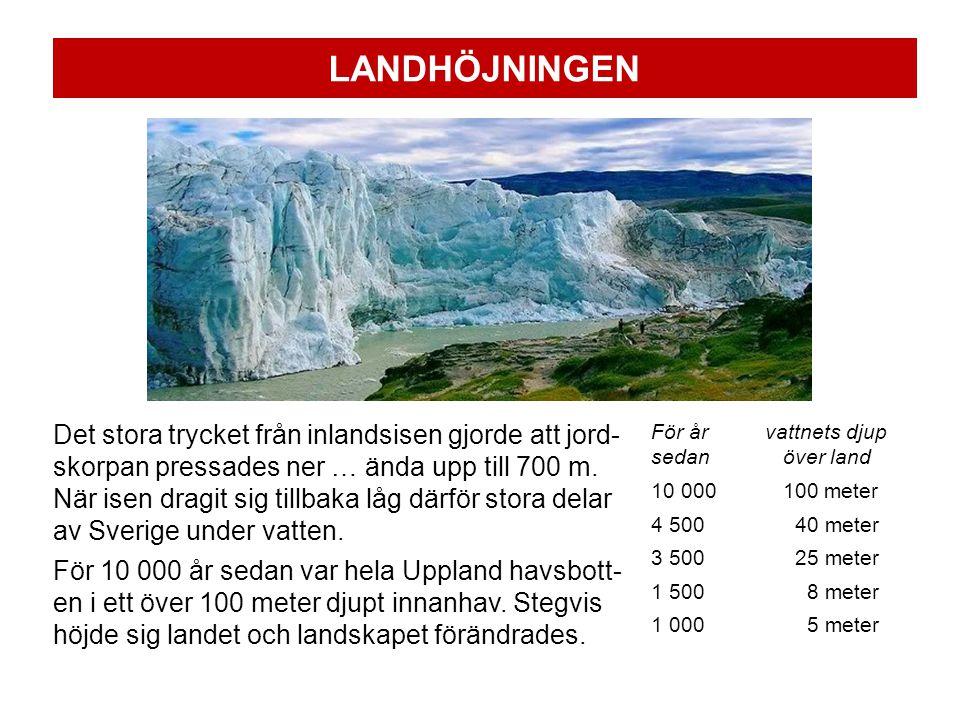 LANDHÖJNINGEN Det stora trycket från inlandsisen gjorde att jord- skorpan pressades ner … ända upp till 700 m.
