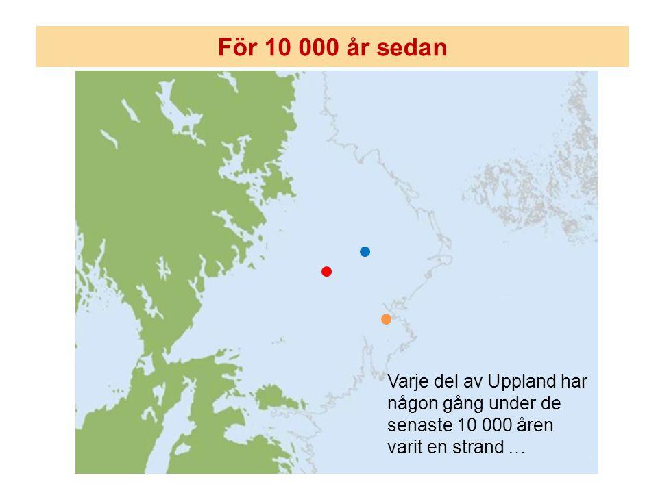 För 10 000 år sedan Varje del av Uppland har någon gång under de senaste 10 000 åren varit en strand …