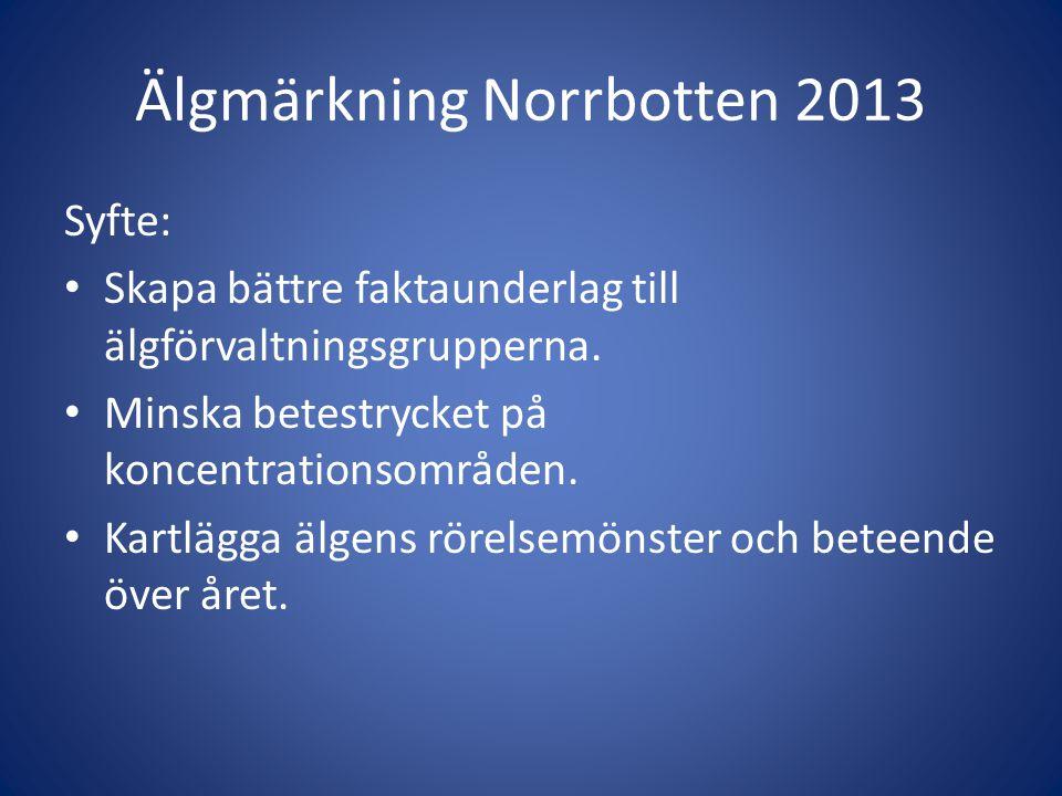 Älgmärkning Norrbotten 2013 Syfte: • Skapa bättre faktaunderlag till älgförvaltningsgrupperna. • Minska betestrycket på koncentrationsområden. • Kartl