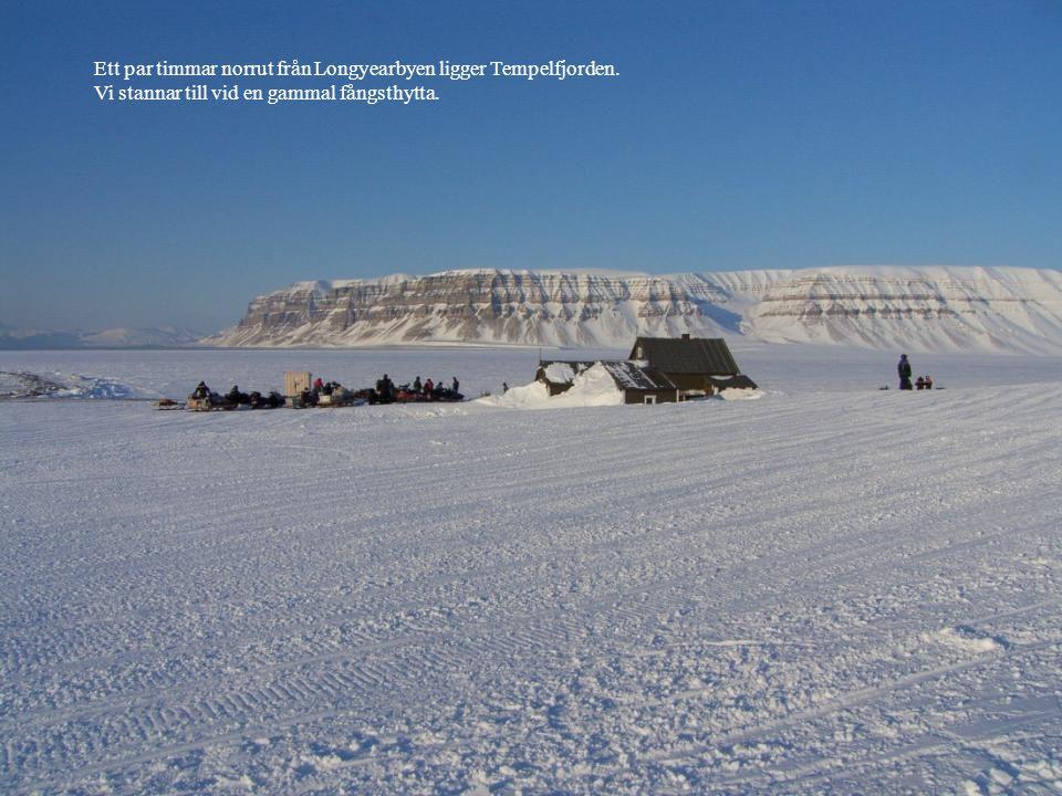 Ett par timmar norrut från Longyearbyen ligger Tempelfjorden. Vi stannar till vid en gammal fångsthytta.