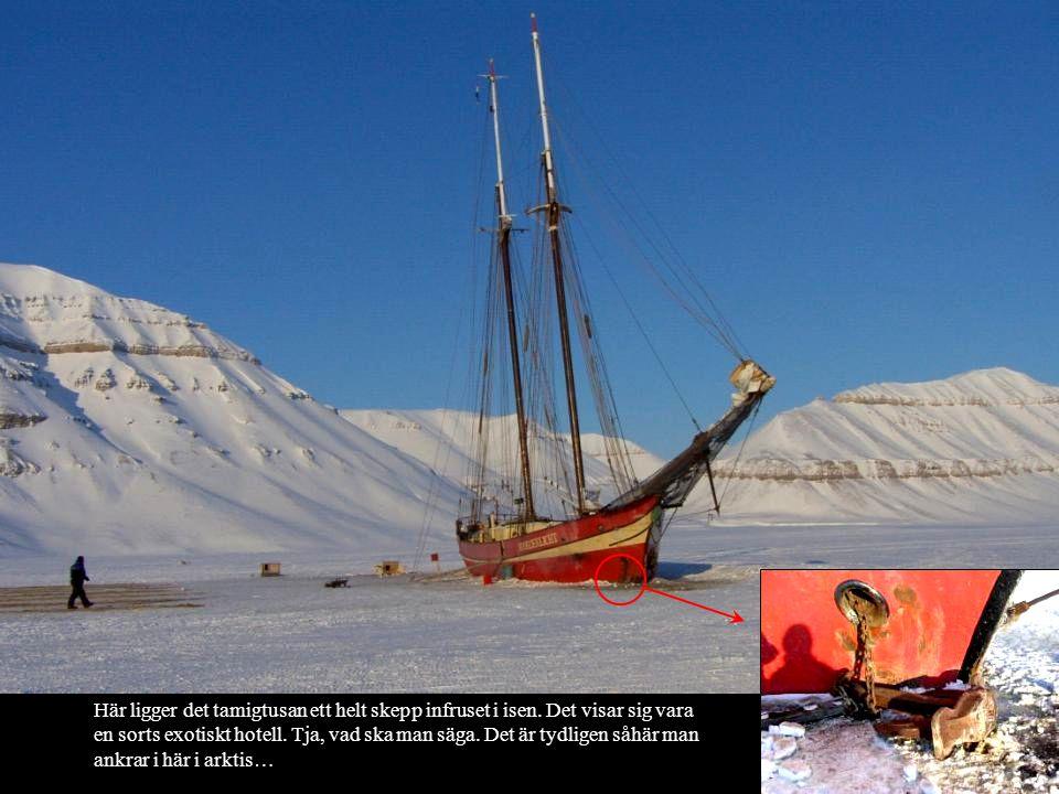 Här ligger det tamigtusan ett helt skepp infruset i isen. Det visar sig vara en sorts exotiskt hotell. Tja, vad ska man säga. Det är tydligen såhär ma