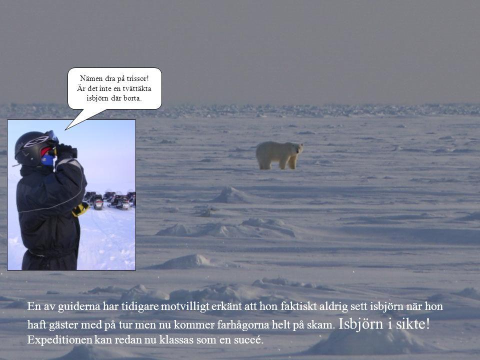 Nämen dra på trissor! Är det inte en tvättäkta isbjörn där borta. En av guiderna har tidigare motvilligt erkänt att hon faktiskt aldrig sett isbjörn n