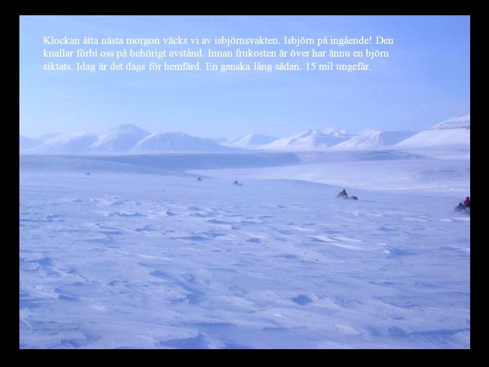 Klockan åtta nästa morgon väcks vi av isbjörnsvakten. Isbjörn på ingående! Den knallar förbi oss på behörigt avstånd. Innan frukosten är över har ännu