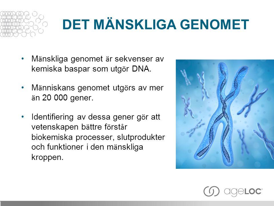 •M ä nskliga genomet ä r sekvenser av kemiska baspar som utg ö r DNA. •M ä nniskans genomet utg ö rs av mer ä n 20 000 gener. •Identifiering av dessa