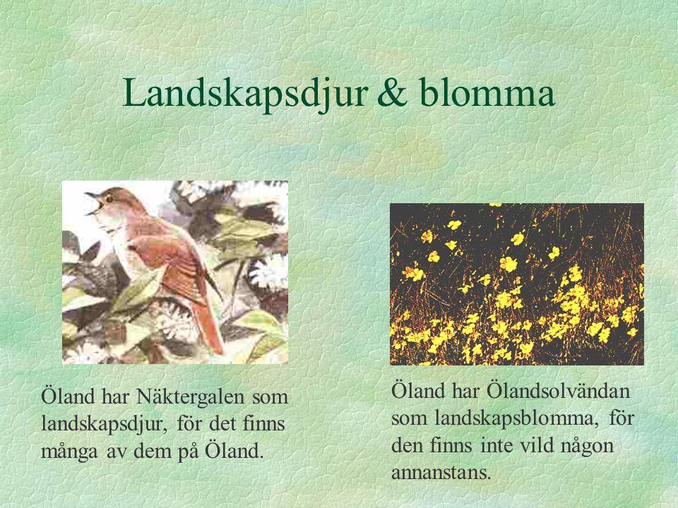 Öland har Näktergalen som landskapsdjur, för det finns många av dem på Öland.