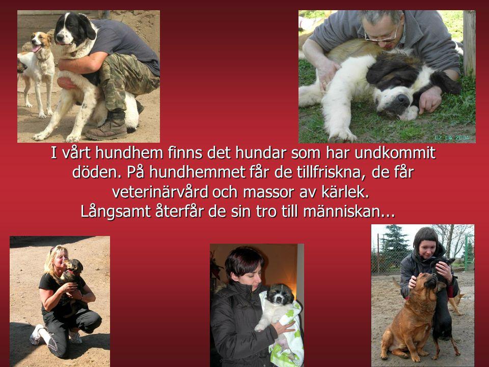 I vårt hundhem finns det hundar som har undkommit döden. På hundhemmet får de tillfriskna, de får veterinärvård och massor av kärlek. Långsamt återfår