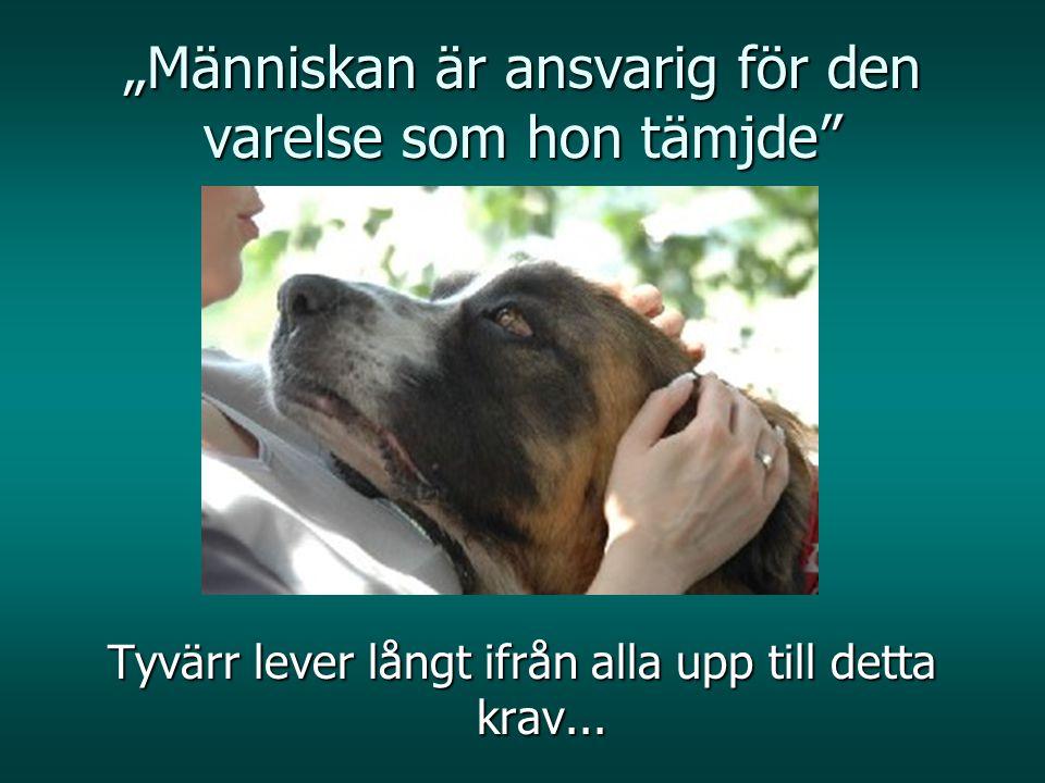 DU kan hjälpa EMIR att hjälpa: F oundation's Account: Bank Slaski O / Grodzisk Maz PL88 1050 1924 1000 0022 6878 6056 SWIFT: ING BPL PW Address: Oddzial, ul.