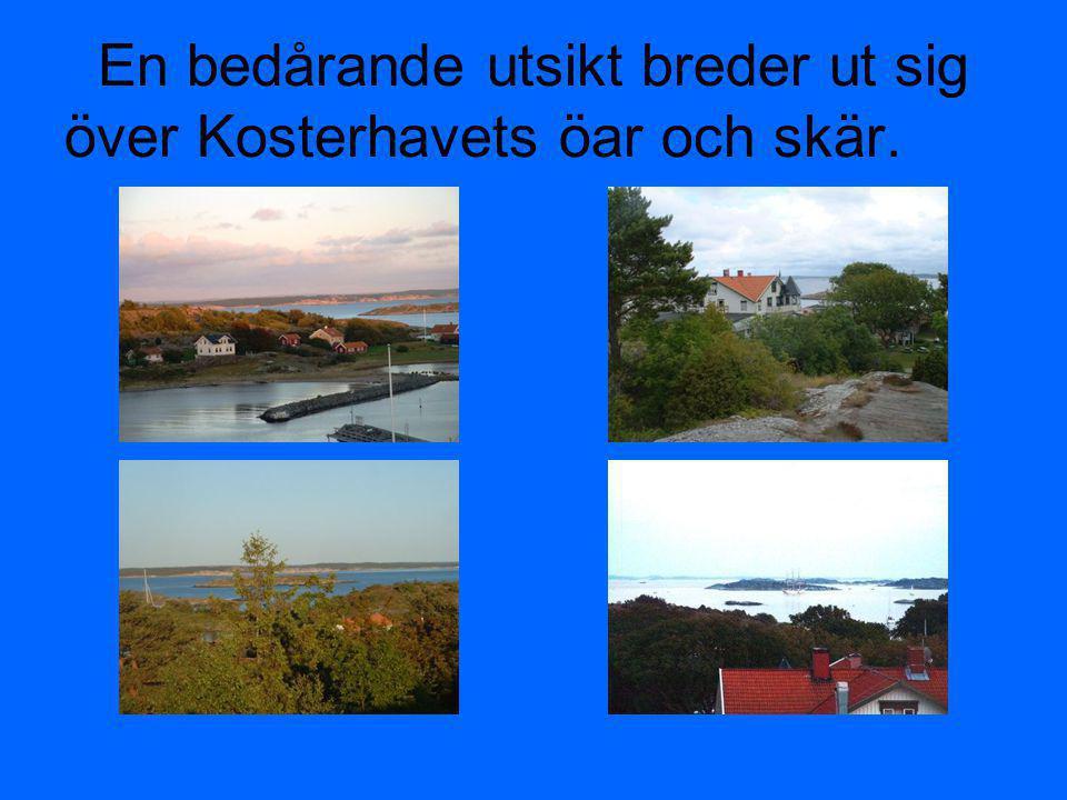 Kosterhavet som snart är Sveriges första marina nationalpark med ett kristallklart vatten att bada och fiska i.